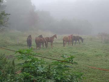 Tollensesee-Radtour, Begegnungen im Nebel