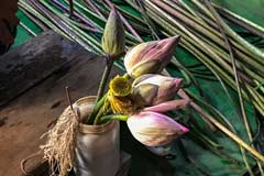 Lotusblüten in einer Weberei am Inle-See in Myanmar