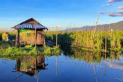 Die schwimmenden Gärten mit einem Pfahlhaus am Inle-See in Myanmar