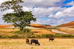 Farbenfrohe Landschaft mit lokaler Landwirtschaft im Osten von Myanmar