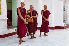 Mönche in der Shwedagon Pagode in Yangon