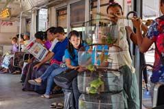Eine fahrender Verkäufer bietet im Zug Vögel an