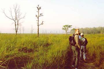 Zu Fuß durch den Dschungel, Chitwan National Park, Nepal