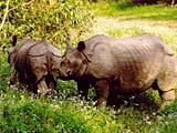 Rhinos im Chitwan Nationalpark in Nepal