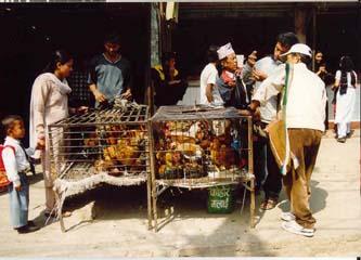 Markt in Pokhara's Bazaar Viertel, Annapurna, Nepal