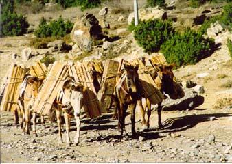 Pferde und Maultiere als Lastenträger,  Annapurna, Nepal