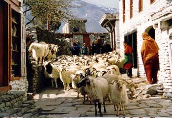 Stau in Marpha, Annapurna, Nepal