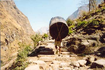 Lastenträger zwischen Tatopani und Ghorepani, Annapurna, Nepal