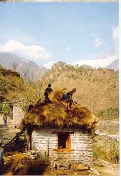 Reetdach decken, Annapurna, Nepal