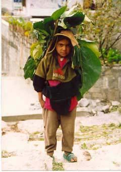 Kind in Ghandruk, Annapurna, Nepal