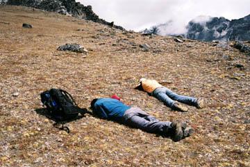 Nepalesische Gudies beim Mittagsschlaf am Chukhung, Everest-Region, Nepal