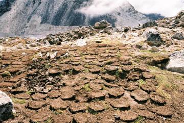 Kuhfladen, Brennmaterial für die Öfen, Everest-Region, Nepal