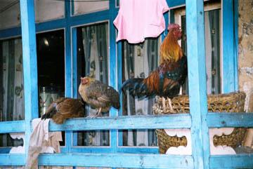 Hühner in Namche Bazar, Everest-Region, Nepal