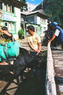 Bändigung von Kühen in Monjo, Everest-Region, Nepal