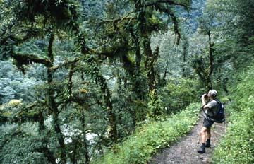 Satt-grüner Urwald auf 3.000m Höhe in Nepal