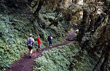 Im Dschungel nach Lama Hotel, Langtang Trek