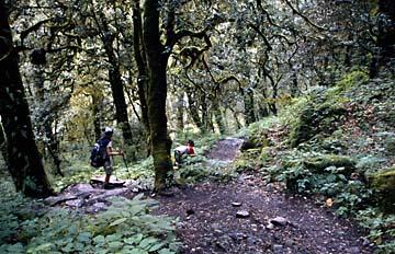 Waldweg hinunter nach Lama Hotel, Langtang Trek