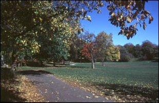 im Prospect Park, Brooklyn, New York