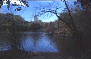 im Central Park, Manhattan, New York