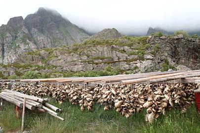 Gestelle mit Trockenfisch in Henningsvaer, Lofoten, Norwegen