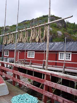 Trockenfisch in Nusfjord, Lofoten, Norwegen