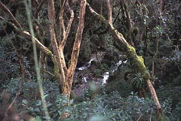 der Wald wird immer dichter und grüner, je weiter wir aufsteigen, Inka Trail, Peru