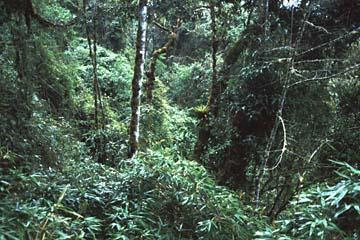 es geht durch 'high jungle', es ist feucht und satt grün, Inka Trail, Peru