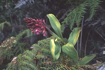 überall gibt es farbige Blumen und Blüten, Inka Trail, Peru