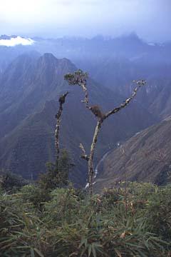 die Aussicht vom letzten Pass des 3. Tages, Inka Trail, Peru