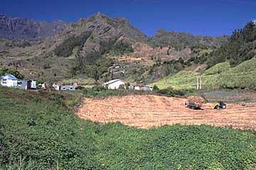 Zuckerrohrabbau im Cirque Salazie, Réunion