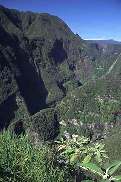 die Takamaka-Schlucht im Osten von Réunion