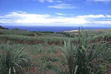 die sanf ansteigende Landschaft oberhalb von St. Joseph, Réunion