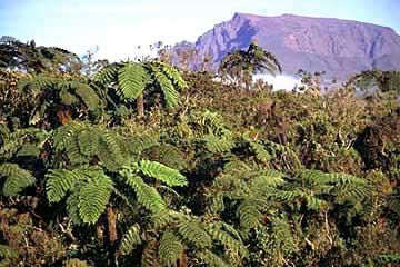 auf der Forststraße im Bebour-Wald, Réunion