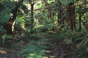 der Sentier l'Ecole Normale zum Trou de Fer, Réunion