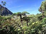 der Märchenwald Foret de Belouve im Herzen von La Réunion im indischen Ozean