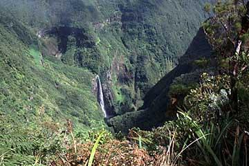 der Blick ins Trou der Fer, Belouve Wald, Réunion