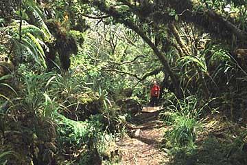 der Märchenwald auf La Réunion, Frankreich
