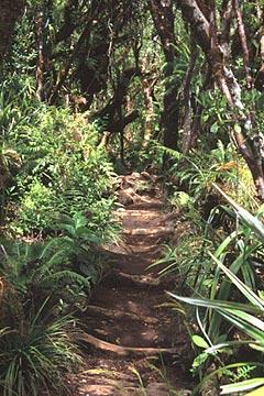 auf dem Weg zum Trou de Fer, Foret de Belouve, Réunion