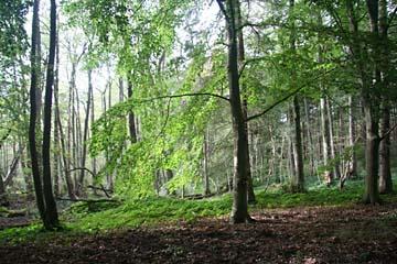 """Waldwanderweg in der """"Schmalen Heide"""" zu den Feuersteinfeldern bei Neu Mukran, Insel Rügen"""