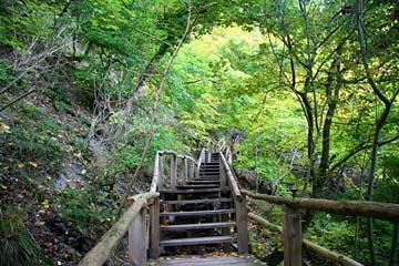 Abstieg vom Hochuferweg durch den Wald zum Uferweg an der Kreideküste von Rügen