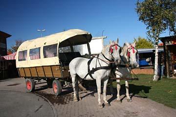 Pferdekutsche in Putgarten, Nordrügen
