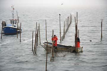 Fischer bei der Arbeit, vor Hiddensee