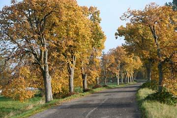 Alleen im Herbst auf Rügen