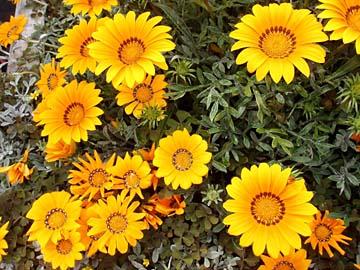 Blumen auf dem Blumenmarkt in San Remo