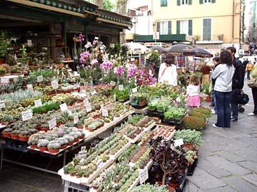 auf dem Blumenmarkt in San Remo, Ligurien