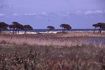 Landschaft am Strand von Budoni, Sardinien