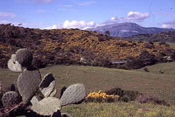 Landschaft am Capo Comino, Sardinien