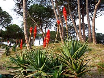 Landschaft am Campingplatz Mariposa in Alghero