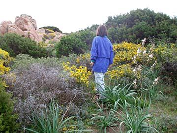 die Macchia in den angrenzenden Gebirgslandschaften der Insel Sardinien, Italien