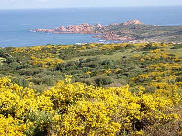 die Macchia bei der Isola Rossa auf Sardinien, Italien